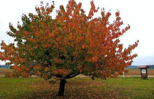 Herbst am Ferienhof