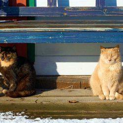 Hofkatzen sonnen sich