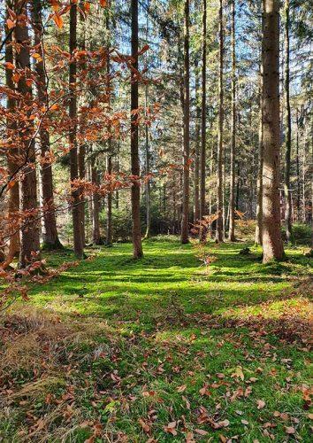 Wald in Franken