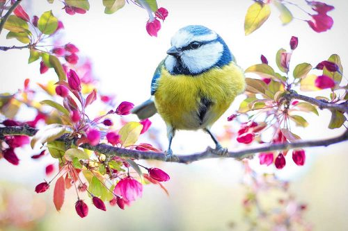 Sonder-Preise zum Frühlingsspecial